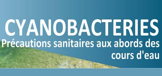 Cyanobactéries : c'est quoi ?