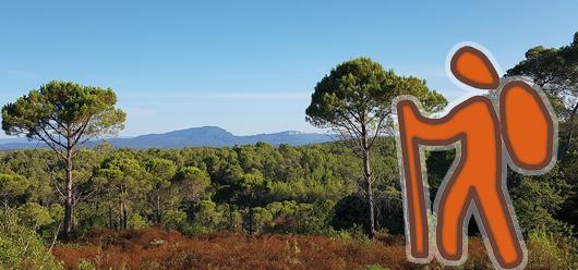 Circuit pédestre du massif forestier de Baillarguet